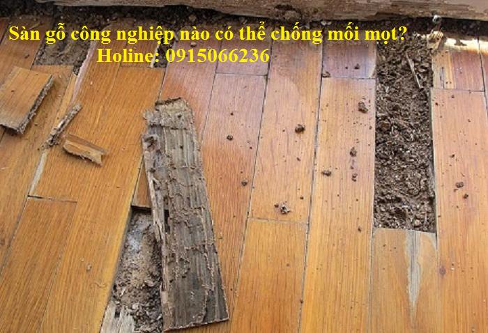 sàn gỗ công nghiệp chống mối mọt