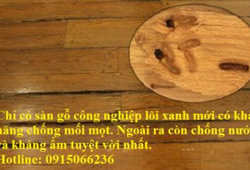 Mối ăn sàn gỗ công nghiệp – CÁCH Chống mối mọt sàn gỗ